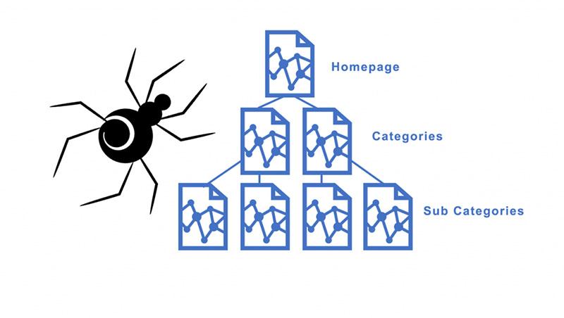 Google Spider sẽ bò trên các website để thu thập thông tin