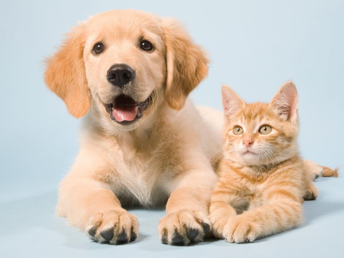 Kinh doanh cho người yêu động vật cần biết